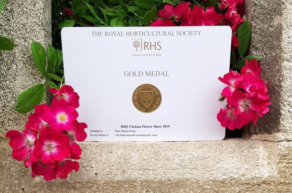 Flower Show 2019 Gold Medal Beales Roses