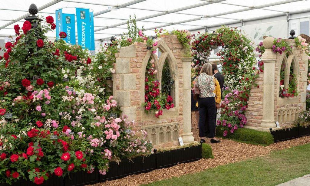 Flower Show Chelsea 2019 Peter Beales Roses 6 Kopie