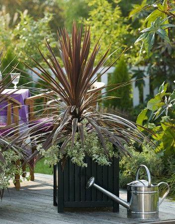 Großer Versailler Pflanzkübel aus Metall bepflanzt mit Keulenlilien