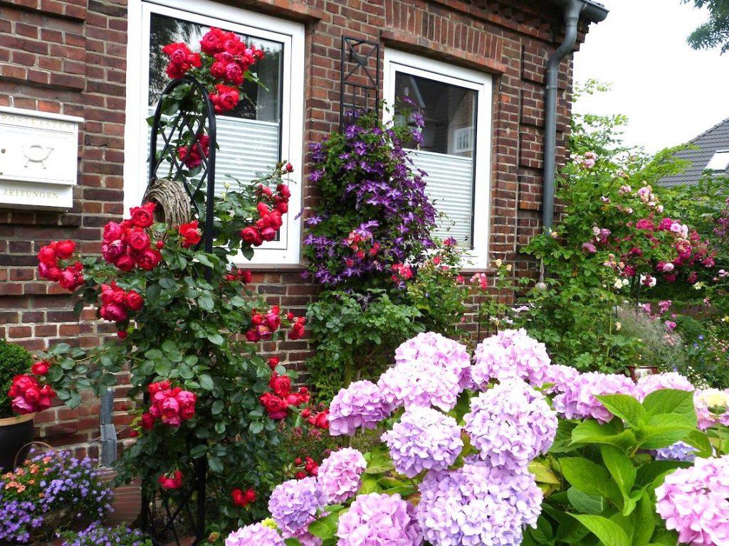 Rosen-und-Clematis an Hauswand