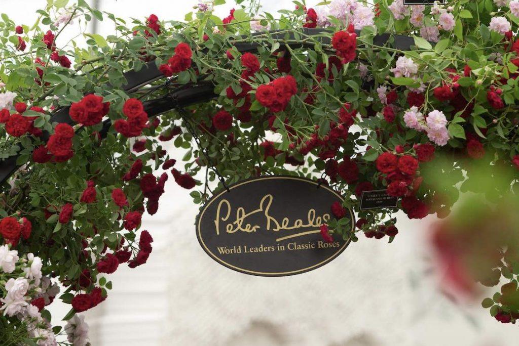 Niemand flicht Rosen über Bögen besser als Peter Beales Roses. Gesehen auf der Chelsea Flowershow 2019.