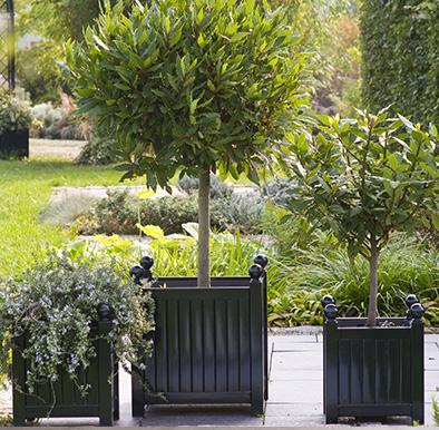 Klassische Pflanzkübel im Versailler Design
