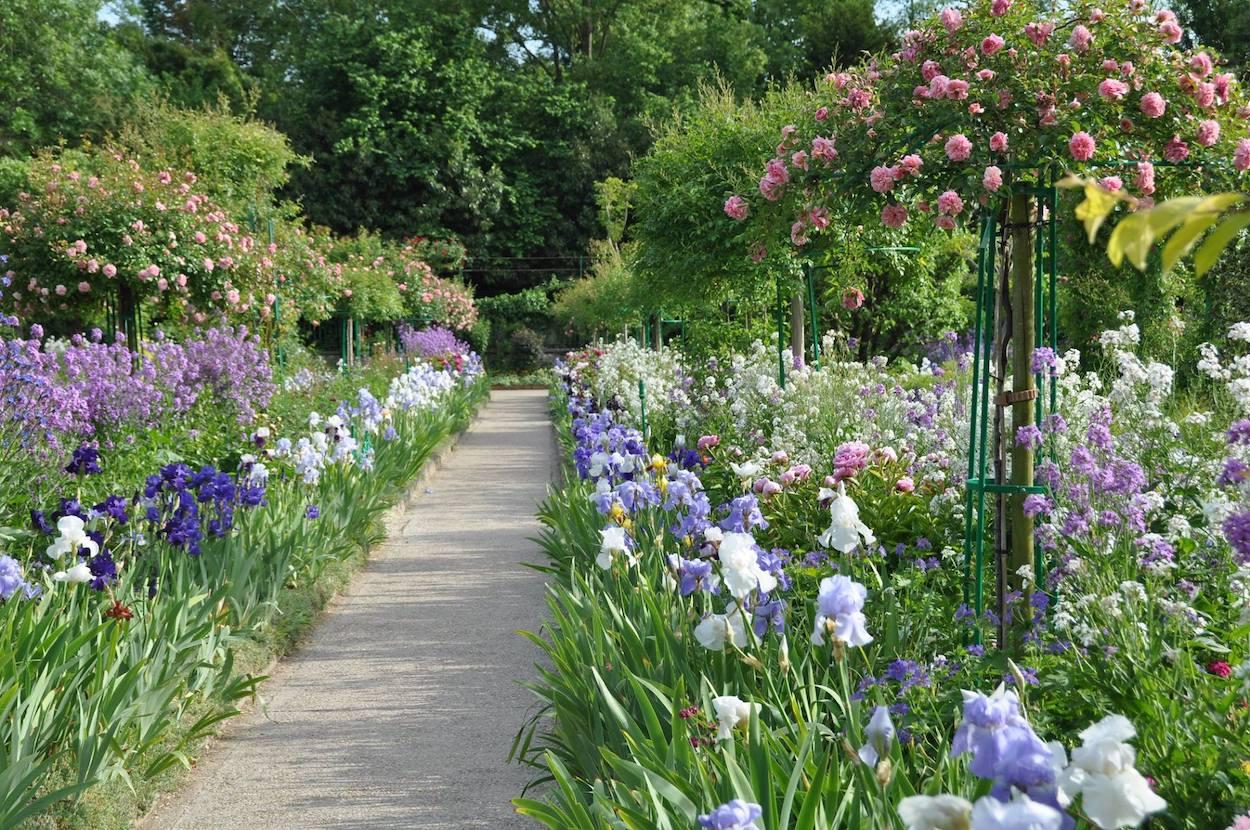 Allee mit Kaskadenrosen in Giverny. Unterpflanzt in pastellfarbenen Iris, Nachtviolen und Pfingstrosen.