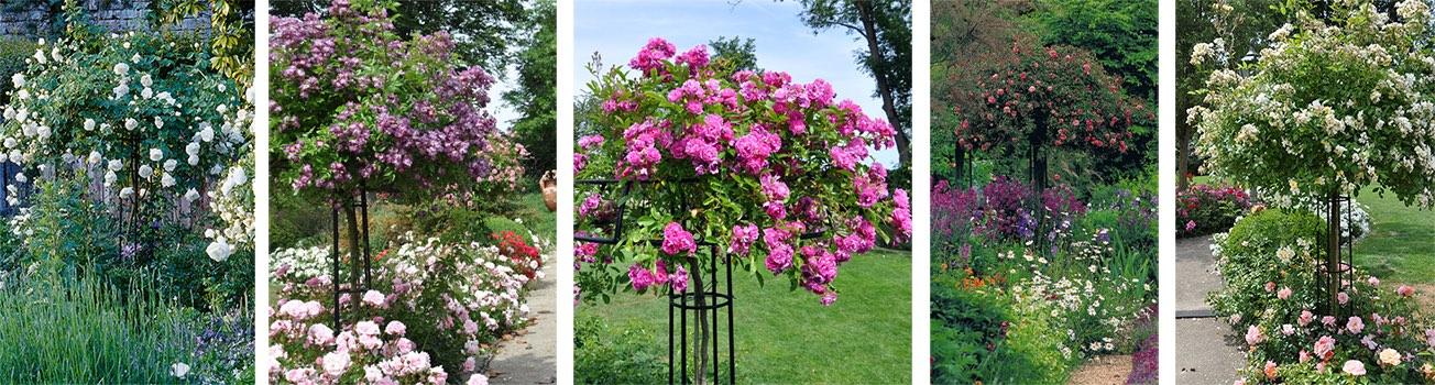 Metall Rosenschirme 'Giverny'. Erfunden von Claude Monet für seinen Garten in Giverny.