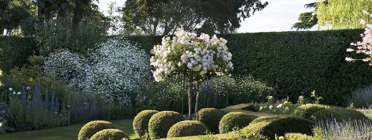 Kasakadenrosen im Garten von The Lenches, Eckington, Worcester