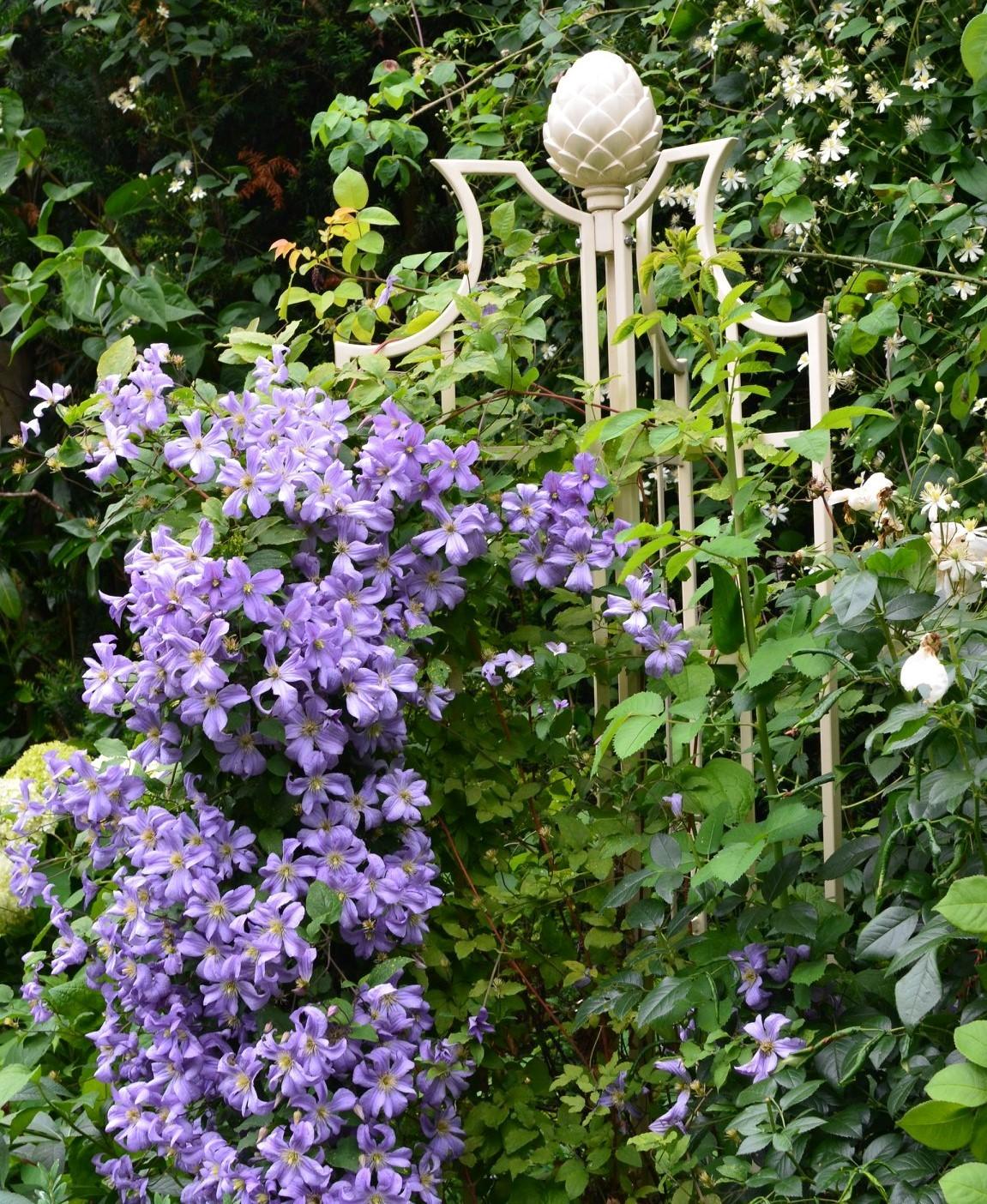 Clematis 'Prince Charles' mit 'Obelisk II' von Classic Garden Elements