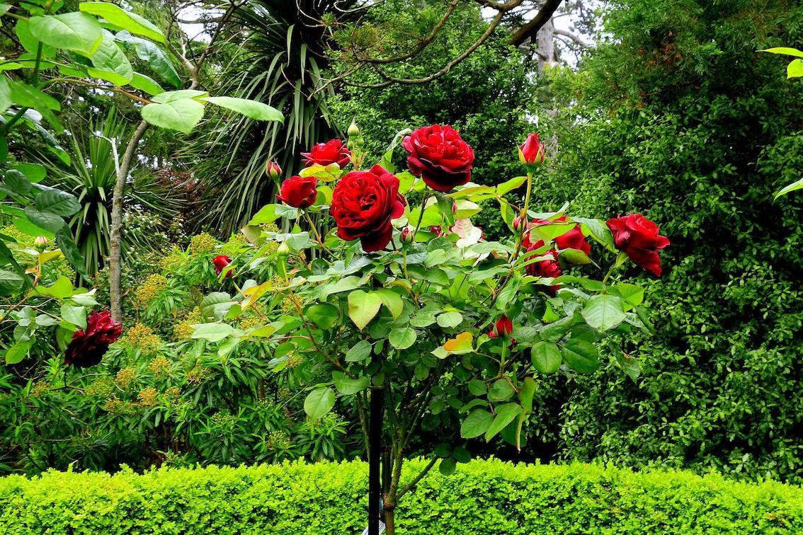 Metall Rosenstäbe kaufen